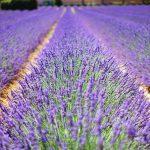 Richtig gute Tipps und tolle Ideen für die Gartenpflege finden Sie hier!